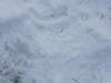 zimski_sportni_dan-6